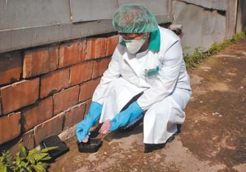 Отравление человека крысиным ядом: как помочь пострадавшему