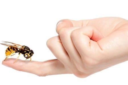 пчела на пальце