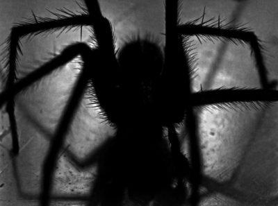 Огромный паук