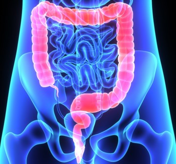 Заболевания толстой кишки: обзор самых распространенных патологий органа