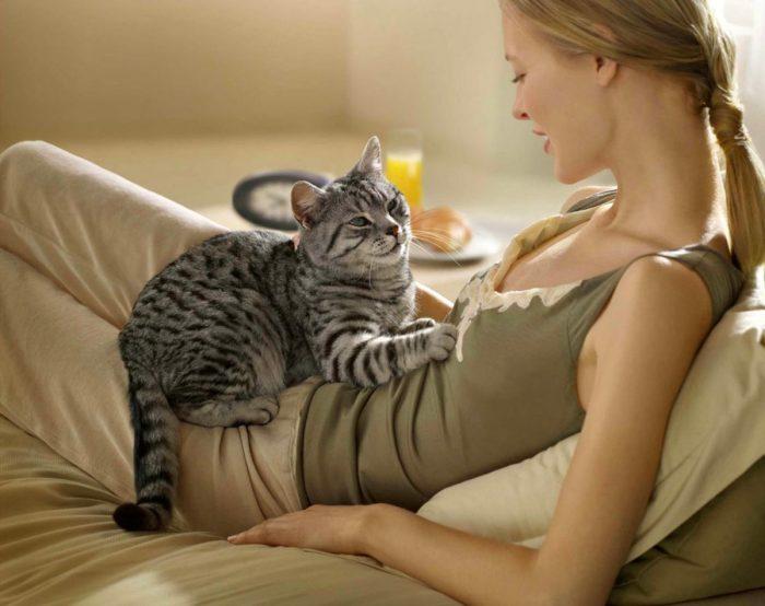 носителем возбудителя инфекции является кошка