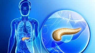 Размеры поджелудочной железы у человека: нормы и отклонения
