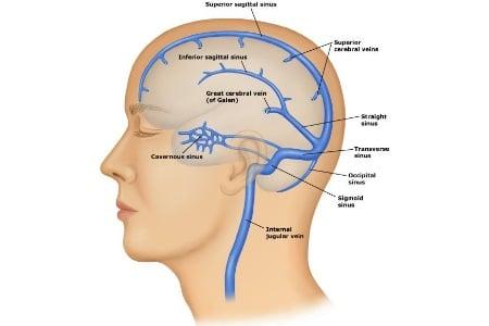 анатомия вен мозга