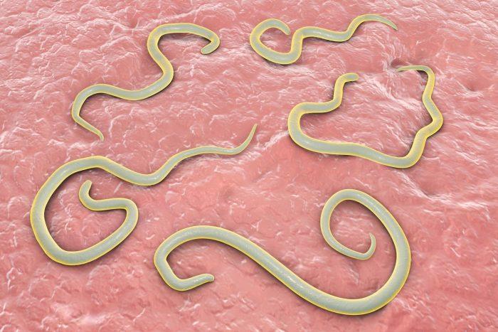 белые черви в кале
